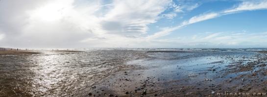 dune park whales